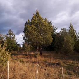 1 HA en Las Golondrinas, Lago Puelo